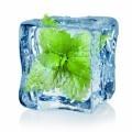 Мята во льду - Mint in ice