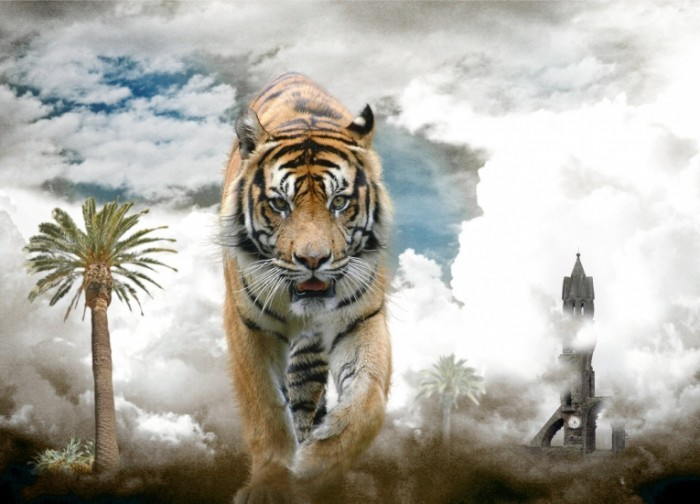 fotolia competition by themajiks d3br6do 700x504 Тигр   Tiger