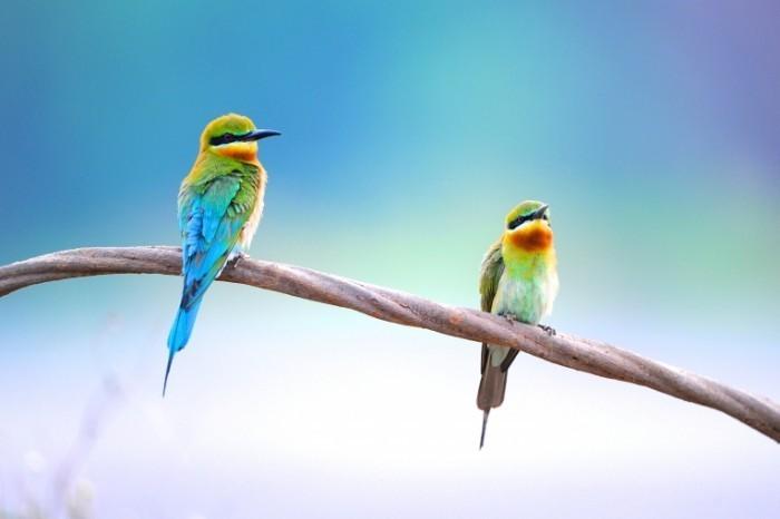 shutterstock 110836973 700x466 Цветные птички   Colored birds