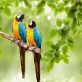 Попугаи на ветки - Parrot on branch
