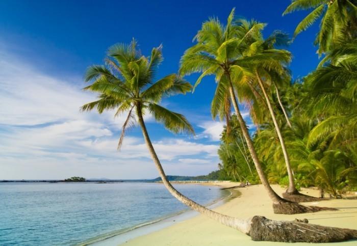 shutterstock 135418973 700x483 Пальмы   Palms