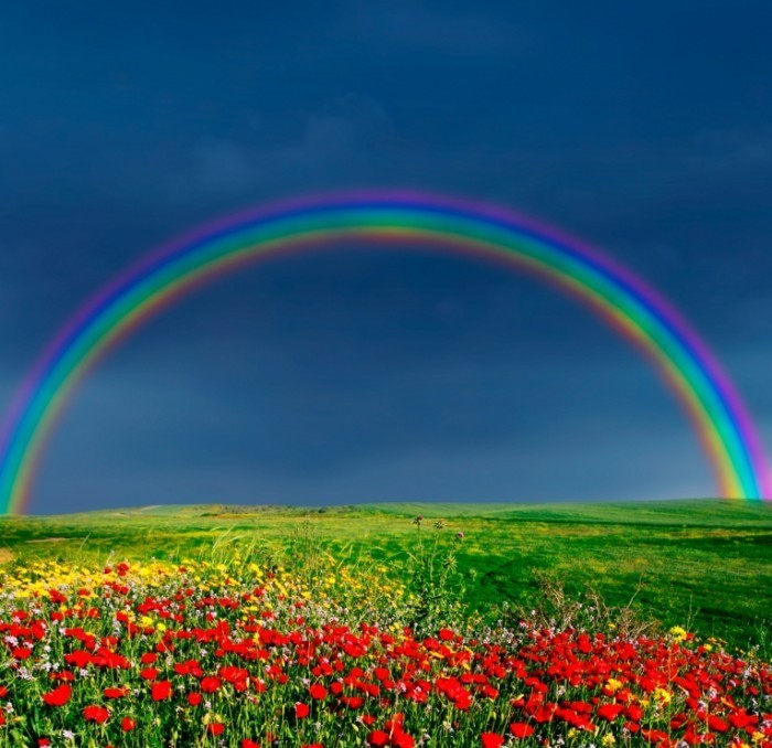 shutterstock 4031791x 700x678 Радуга над полем   Rainbow over field