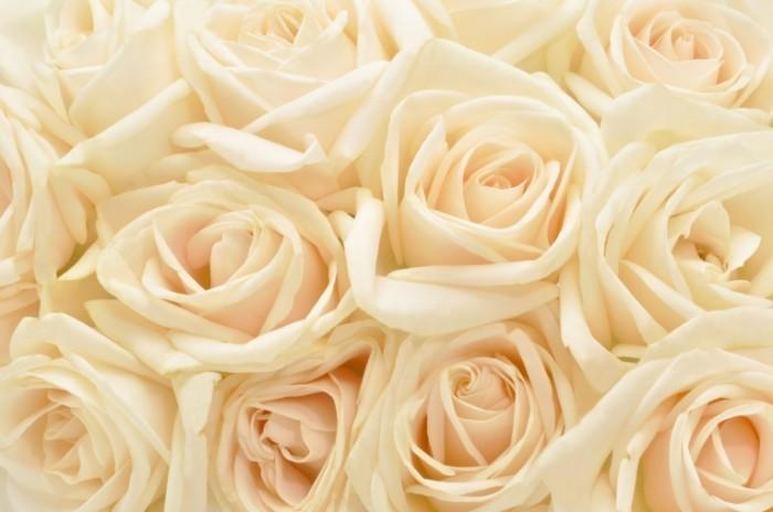 shutterstock 81997942 700x464 Фон бутоны роз   Background rosebuds