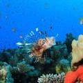 Подводный мир - Underwater