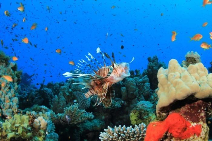 shutterstock 88644166 700x466 Подводный мир   Underwater