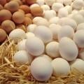 Куриные яйца - Сhicken eggs