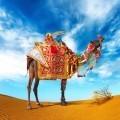 Верблюд - Сamel