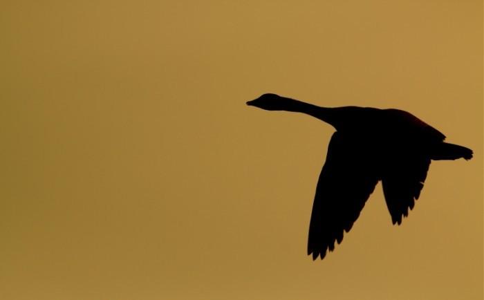 shutterstock 108288992 700x434 Птица в небе   Bird in the sky