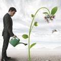 Мужчина поливает росток - Man watering sprout
