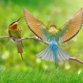 Декоративные птички - Decorative birds