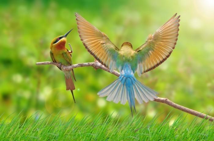 shutterstock 139493444 700x464 Декоративные птички   Decorative birds
