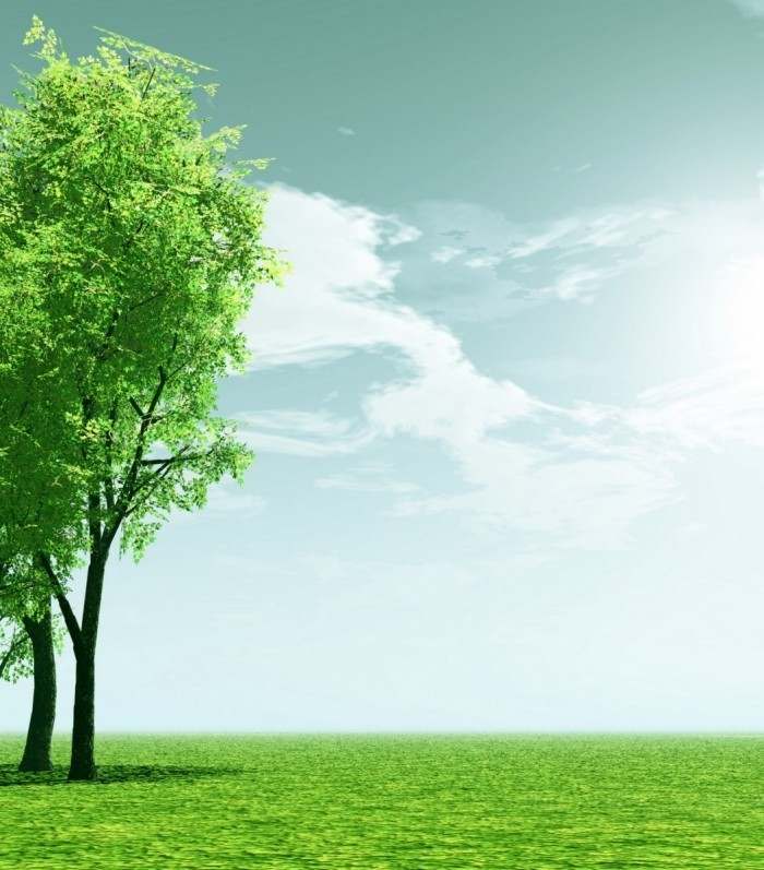 shutterstock 198118601 700x797 Дерево на зеленом лугу   Tree on green meadow