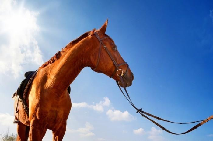 shutterstock 75641710 700x466 Лошадь   Horse