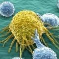 Раковые клетки - Cancer cells