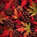 Листья клена и шишки - Maple leaves and pine cones