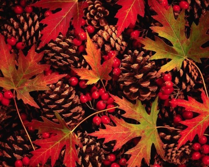Autumn 020913 700x560 Листья клена и шишки   Maple leaves and pine cones