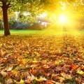 Осенний пейзаж - Autumn Landscape