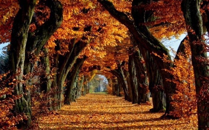 Autumn autumn 35540976 2560 1600 700x437 Осенний парк   Autumn Park
