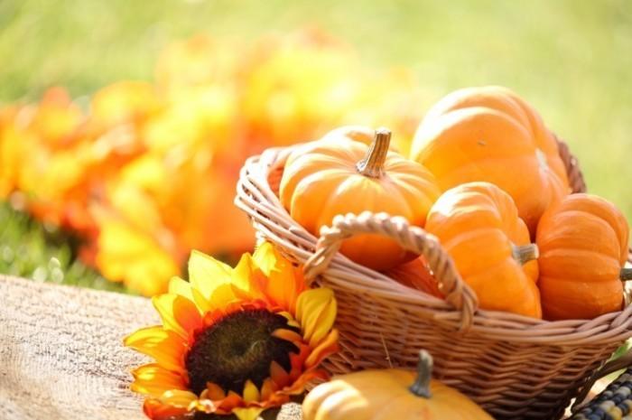 Fotolia 53958058 Subscription Monthly M 700x465 Тыква в корзине   Pumpkin in a basket