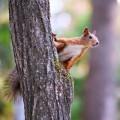 Белочка на дереве - Squirrel on a tree
