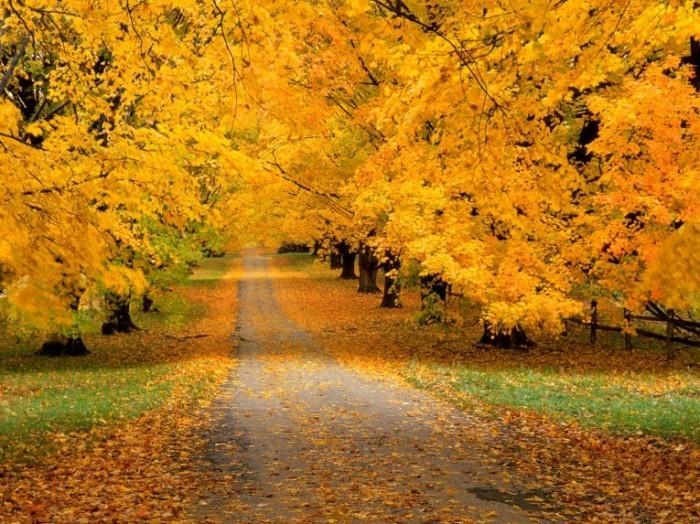 Yellow road 700x524 Осенний парк   Autumn Park