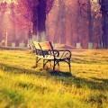 Лавочка в парке - Bench in the park