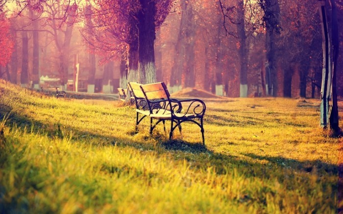autumn landscape wide 700x437 Лавочка в парке   Bench in the park