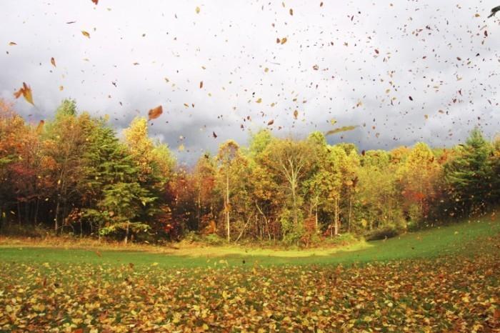 istock 000000848039medium 700x466 Осенний лес   Autumn forest