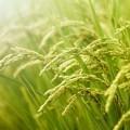 Фон травы - Grass background
