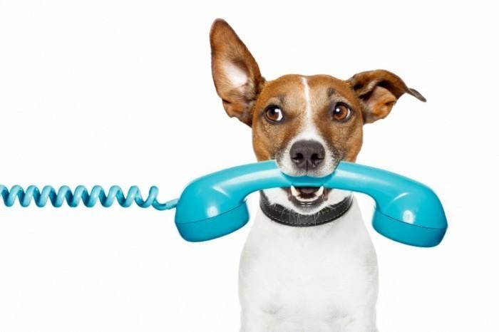 shutterstock 99379946 700x466 Собака с телефонной трубкой   Dog with handset