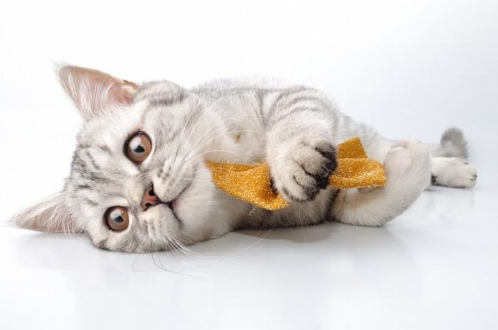 Depositphotos 11064127 700x464 Кот с бантиком   Cat with bow