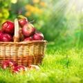 Кошелка с яблоками - Wallets with apples