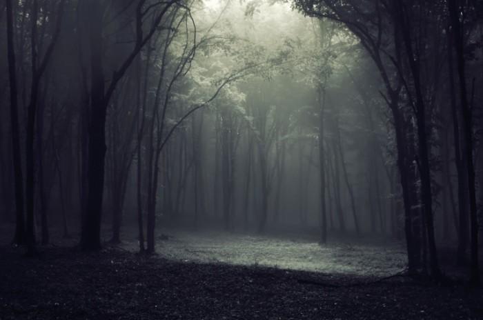 Fotolia 18166533 Subscription L 700x464 Мрачный лес   Gloomy forest