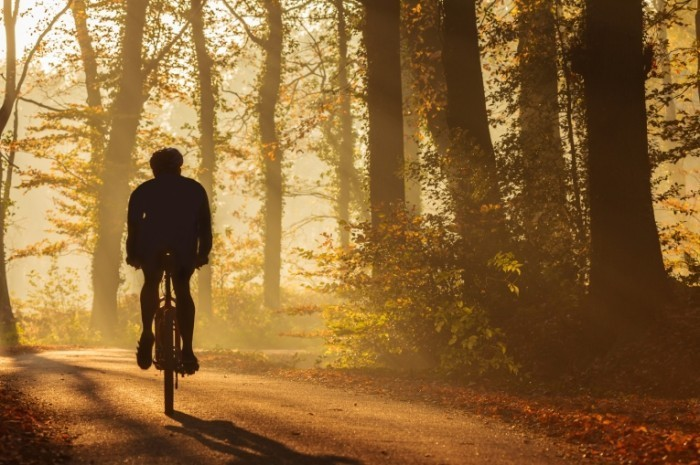 Fotolia 50888379 Subscription Monthly M 700x465 Велосипедист в лесу   Cyclist in the forest