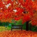Осень - Autumn