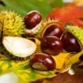 Каштаны - Chestnuts