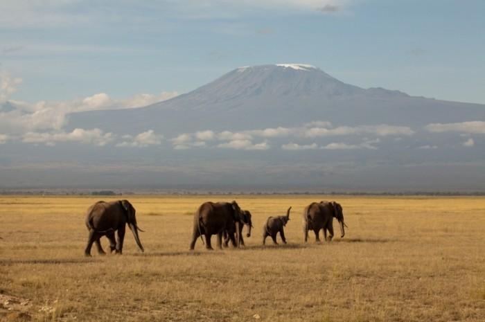 fotolia 23392513 m 700x465 Слоны   Elephants