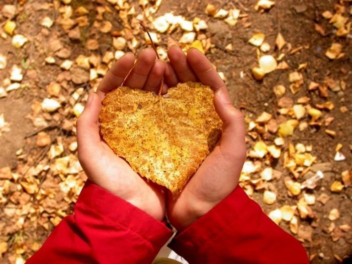 heartshapedleaf 700x524 Лист в руках   Leaf in hand