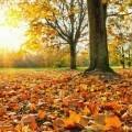 Осенний парк - Autumn Park