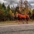 Лошадь - Horse