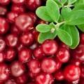 Брусника - Cowberry