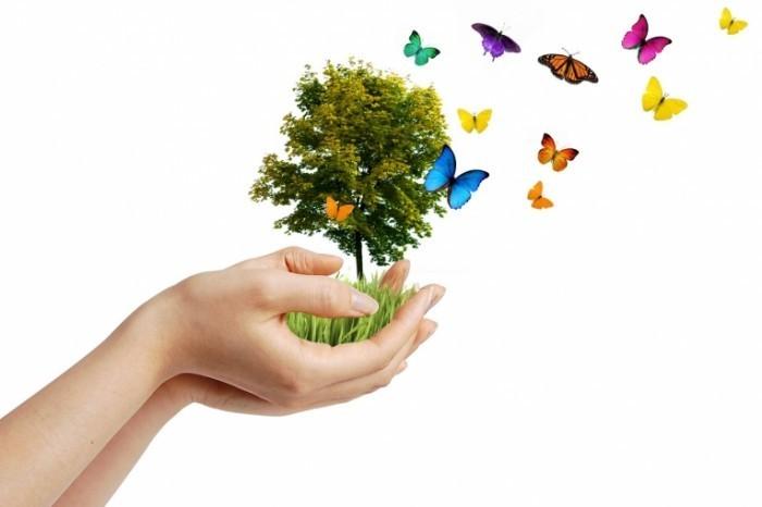 Fotolia 12301811 Subscription L 700x466 Дерево в руках   Tree in hands