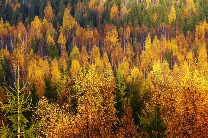 Fotolia 692500 Subscription XL 700x464 Деревья в лесу   Trees in the forest