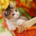Котенок - Kitten