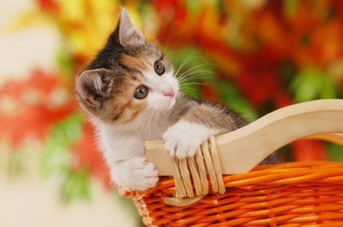 fall kitty 700x464 Котенок   Kitten