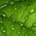 Роса на листке - Dew on a leaf
