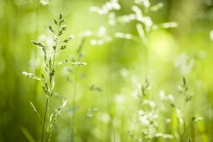 rsz dollarphotoclub 61734006 700x466 Трава   Grass