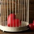Сердце в клетке - Heart in a cage