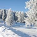 Деревья в снегу - Trees in the snow