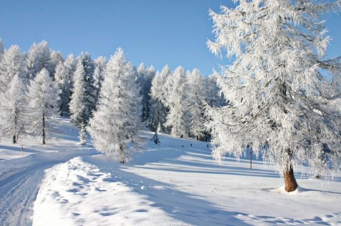 Fotolia 1372847 M 700x464 Деревья в снегу   Trees in the snow